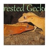 Crested gecko Drink Coasters