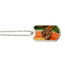 Butterfly Dog Tags
