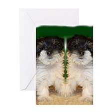Chorkie puppie Greeting Card