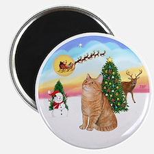 Take Off - Orange Tabby cat Magnet