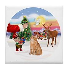 Treat for an Orange Tabby Cat. Tile Coaster
