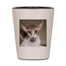 Oriental Shorthair Cat ornament Shot Glass