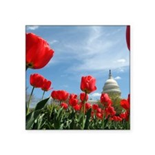 "US Capitol Building Surroun Square Sticker 3"" x 3"""