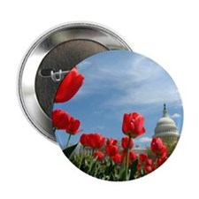 """US Capitol Building Surrounded by Spr 2.25"""" Button"""