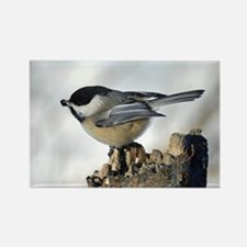 Chickadee With Seed Rectangle Magnet