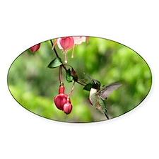 Hummingbird Black-chinned Decal