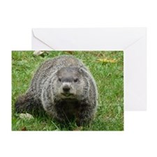 Groundhog eating Greeting Card