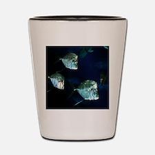 Underwater Serenity Shot Glass