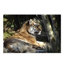 Tiger chillin Postcards (Package of 8)