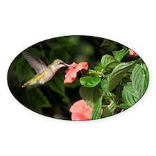 HUmmingbird Decal