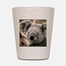 Cute Koala bear Shot Glass