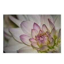 Blushing Pink Dahlia Postcards (Package of 8)