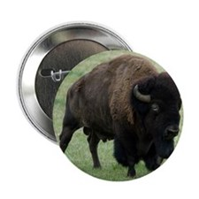"Tote10x10_Buffalo_1 2.25"" Button"