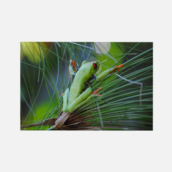 Green and Red Frog on a Leaf 3 Rectangle Magnet