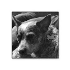 "Heeler in Black and White Square Sticker 3"" x 3"""