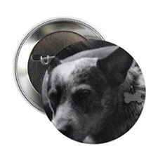 "Heeler in Black and White 2.25"" Button"