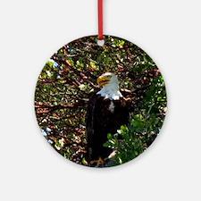 Male Bald Eagle in Tree Round Ornament