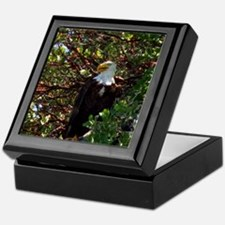 Male Bald Eagle in Tree Keepsake Box