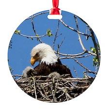 Mama Eagle Looking at Eaglet Ornament