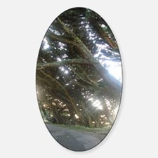 On the trail to the Point Reyes Lig Sticker (Oval)
