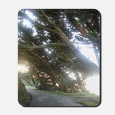 On the trail to the Point Reyes Lighthou Mousepad