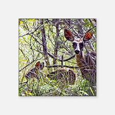 "mule deer doe 2 Square Sticker 3"" x 3"""