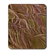Oesophagus epithelium, SEM Mousepad