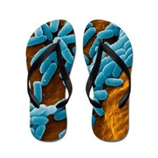 Pseudomonas aeruginosa bacteria, SEM Flip Flops