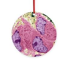 Osteoblasts, TEM Round Ornament