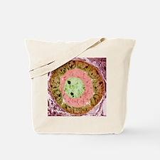 Ovarian follicle, TEM Tote Bag