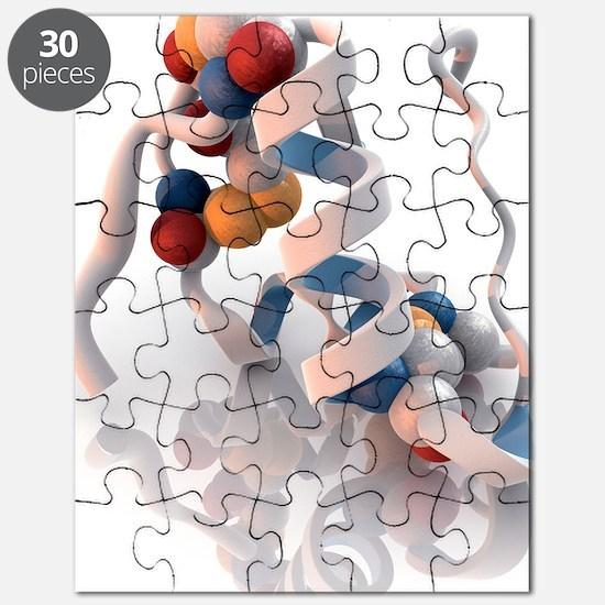 Insulin molecule Puzzle