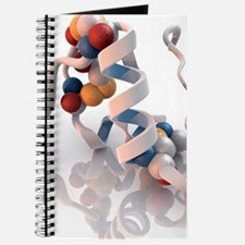 Insulin molecule Journal