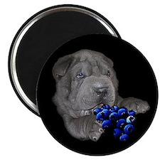 Blue Shar Pei Magnet