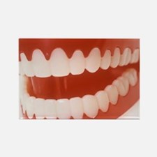 Toy teeth Rectangle Magnet