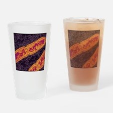 Tuberculosis bacteria Drinking Glass