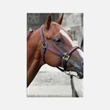 The Show Horse Rectangle Magnet