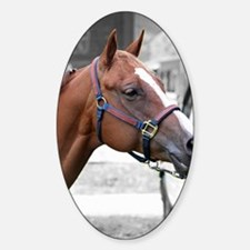 The Show Horse Sticker (Oval)