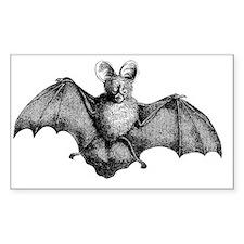 Vintage Bat Illustration Decal