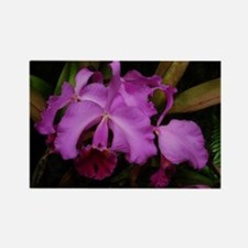 Longwood Orchid Rectangle Magnet