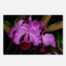 Longwood Orchid Postcards (Package of 8)