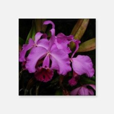 "Longwood Orchid Square Sticker 3"" x 3"""