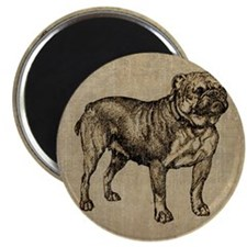 Vintage Bulldog Magnet