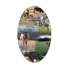 Texas Longhorn Cattle Oval Car Magnet