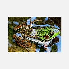 Young Bullfrog Rectangle Magnet