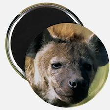 Hyena Magnet
