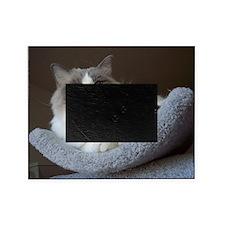Ragdoll cat (blue bicolor) Picture Frame