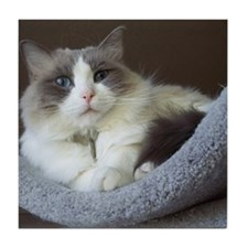 Ragdoll cat (blue bicolor) Tile Coaster