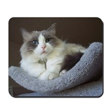Ragdoll cat (blue bicolor) Mousepad