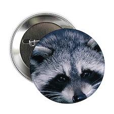 """Cute Raccoon 2.25"""" Button"""
