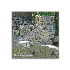 "Baby Snow Leopards Square Sticker 3"" x 3"""